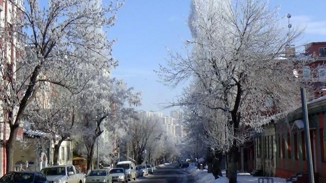 Kars'ta Ağaçlar Kırağı Tuttu