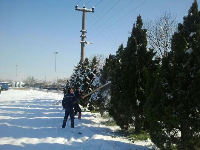Kartepe'de Ağaçlara Kar Bakımı