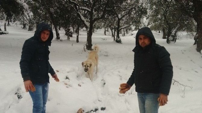 Karda Hayvanlar Unutulmadı