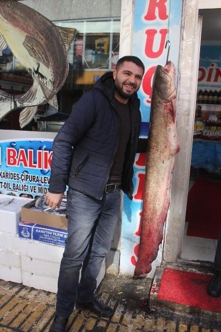 Aras Nehrinde Yakalanan 1,5 Metrelik Yayın Balığı Vatandaşların İlgi Odağı Oldu