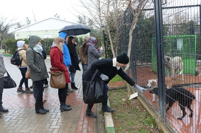 Çek Ve Polonyalı Öğrenciler Barınağa Hayran Kaldı