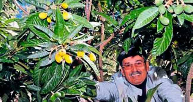 Demre'de Malta eriği meyve verdi