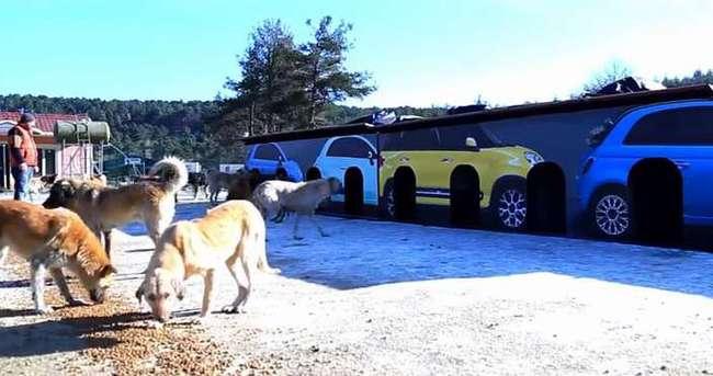 Fiat sokak hayvanlarına yuva oldu