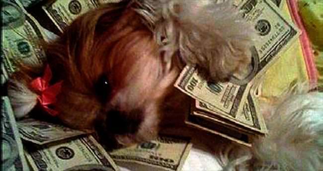 Instagramın en zengin köpekleri