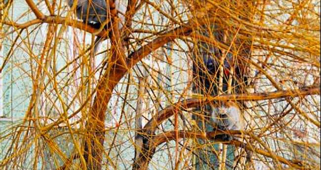 Üşüyen kediler ağaca sığındı