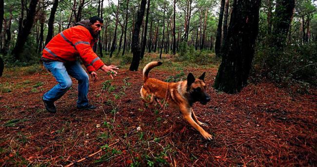 Kurtarma köpeğinin işini seveni makbul