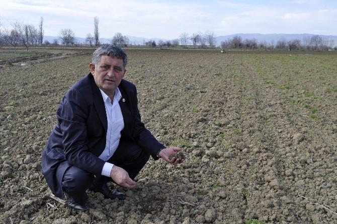 (Özel) Tarım Ambarı Yenişehir'de Organik Tarım Yapan Yok