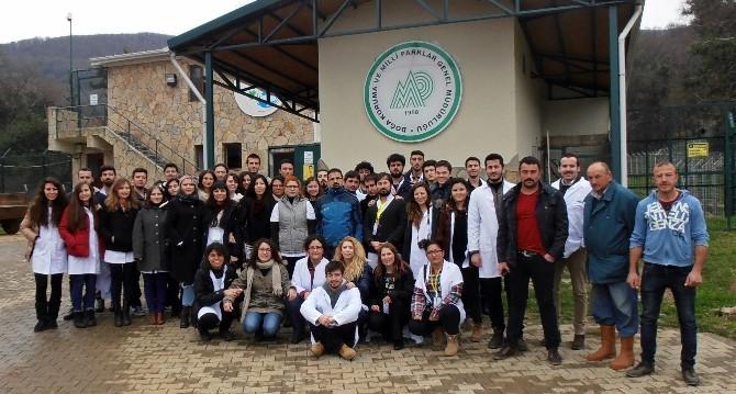 Veteriner Adayları Yaracabey Yaban Hayatı Kurtarma Ve Rehabilitasyon Merkezi'ni Gezdi