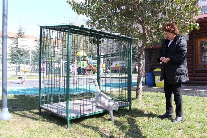 Bolu Belediyesi Sahipsiz Hayvanlara Sahip Çıkıyor