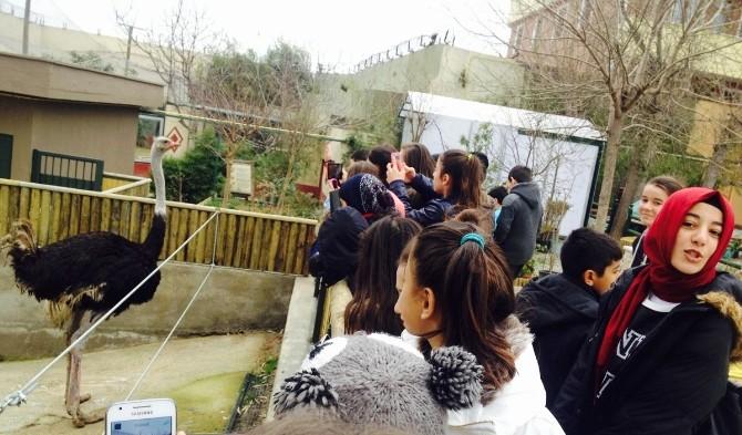 Minik Judocular, Hayvanat Bahçesini Gezdi