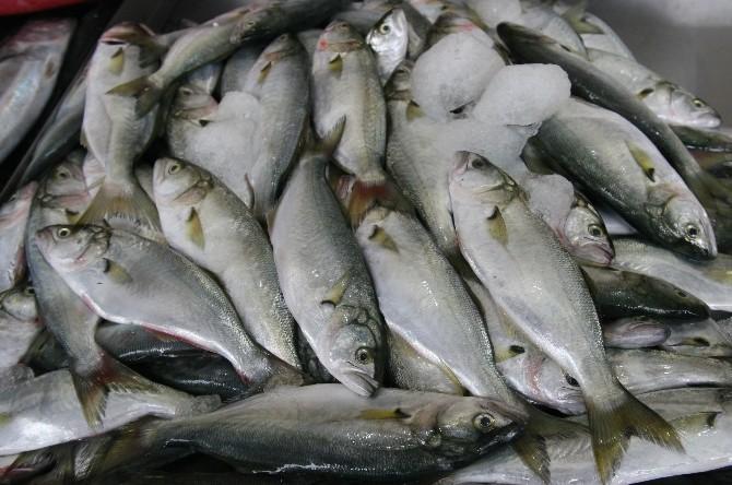 Kafes Balıkçılarına 865 Bin TL Destek