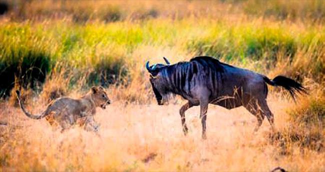 Anne aslandan avlanma dersleri