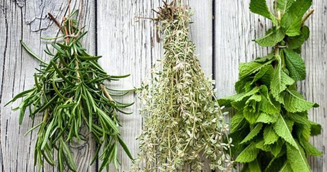 Hangi bitki neye iyi gelir?