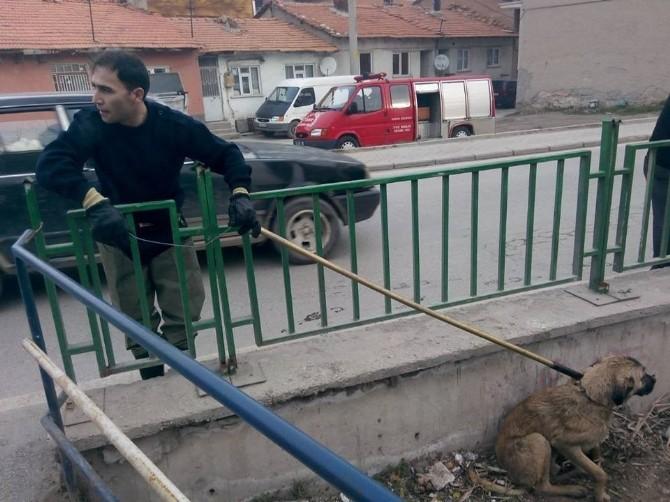 Kanala Düşen Köpeği İtfaiye Erleri Kurtardı