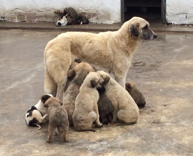 Hayvan Barınağı İyileştiriliyor