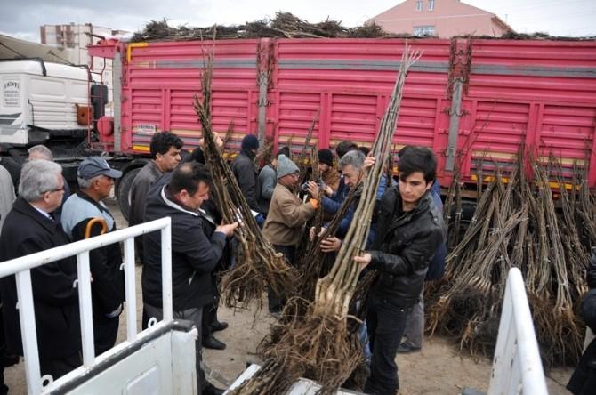 Karaman'da Çiftçilere Meyve Fidanı Dağıtıldı