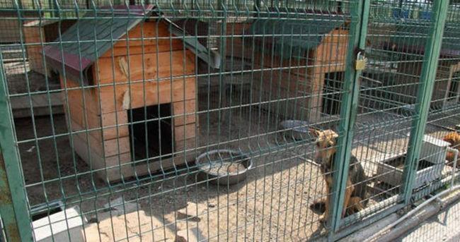 Hayvansever 'Üniversite' makarna topluyor