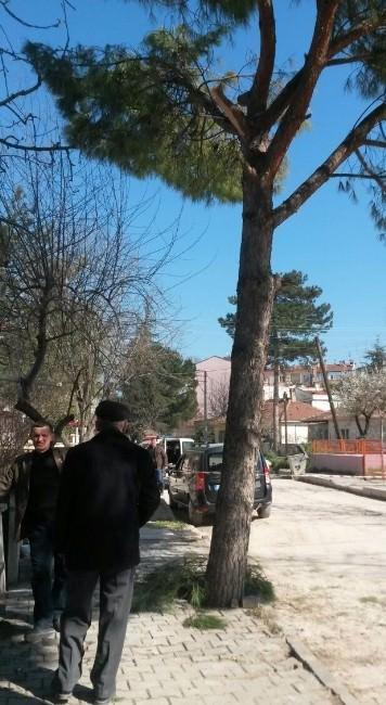 Emekli Astsubay Budamak İstediği Ağaçtan Düşerek Öldü