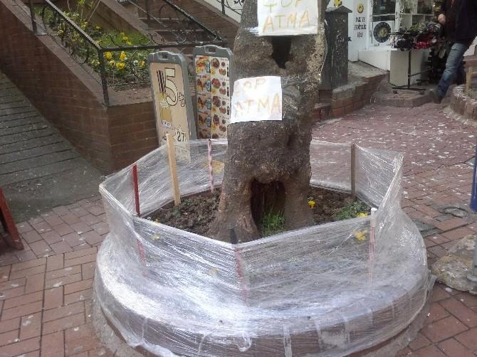 Asırlık Çınara, Vatadandaşlardan Çöp Önlemi