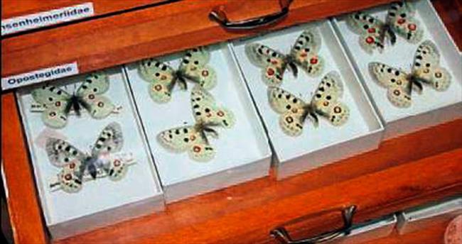 Böcek Müzesi'nde 30 bin tür teşhirde
