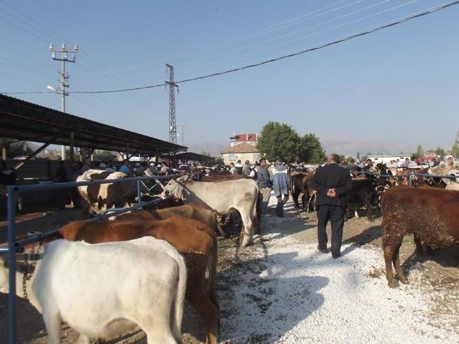 Şarkikaraağaç Hayvan Pazarı Şap Hastalığı Sebebiyle Kapatıldı