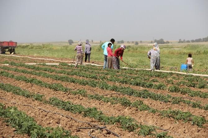 Mevsimlik İşçi Ücretleri Arttı