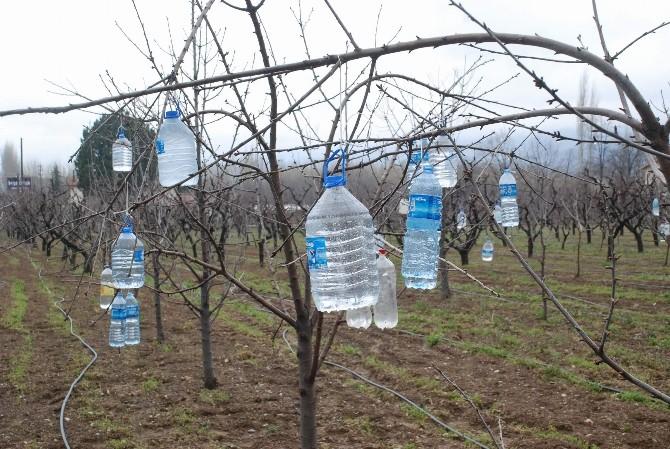 Ağaç Dallarına Pet Şişe Asan Çiftçinin İlginç Yöntemi