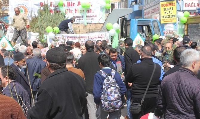 Çankırı'da 13 Bin 773 Adet Fidan Dağıtıldı