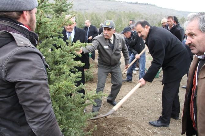 Orman Haftası Kutlamarında Fidan Dikimi Yapıldı