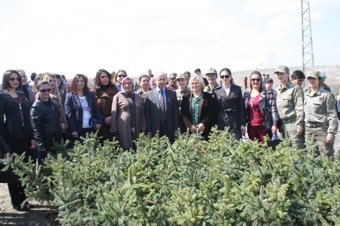 Iğdır'da Bereket Ormanları Projesi