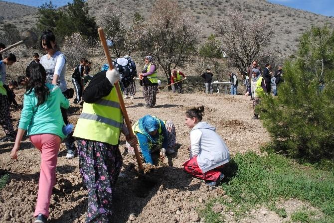 Amasya Belediyesi'nden 500 Fidan