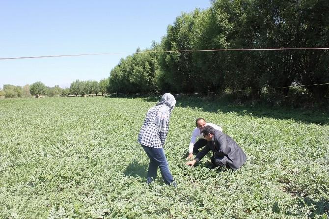 Mazot, Gübre Ve Toprak Destekleme Başvuruları Uzatıldı