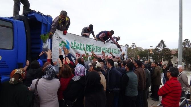 Erzincan'da Çam Yığılması