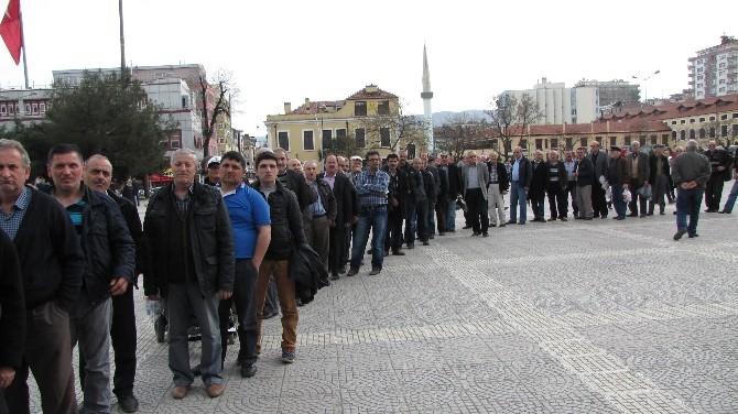 Samsun'da 2 Bin Fıstık Çamı Fidanı Dağıtıldı