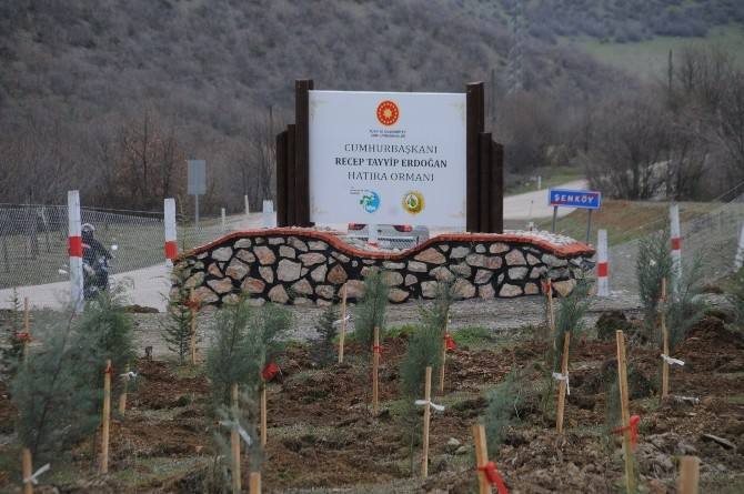 Tokat'ta Cumhurbaşkanı Erdoğan Hatıra Ormanı