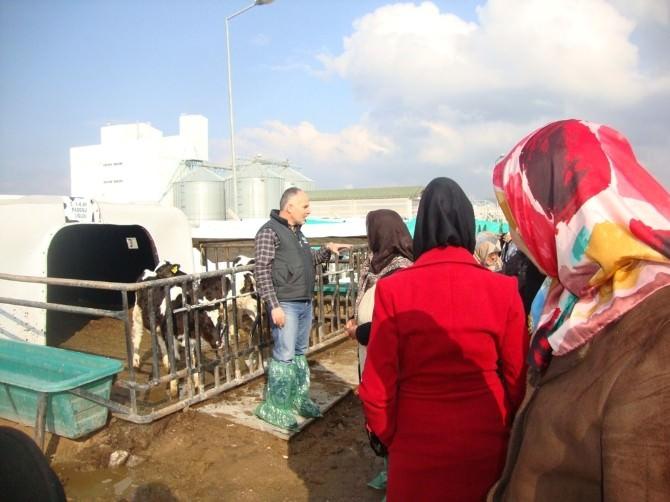 Aksaray'da Kadın Çiftçi Eğitim Programı Devam Ediyor