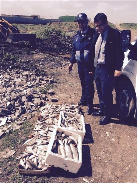 Reyhanlı'da 70 Kilo Bozuk Balık İmha Edildi