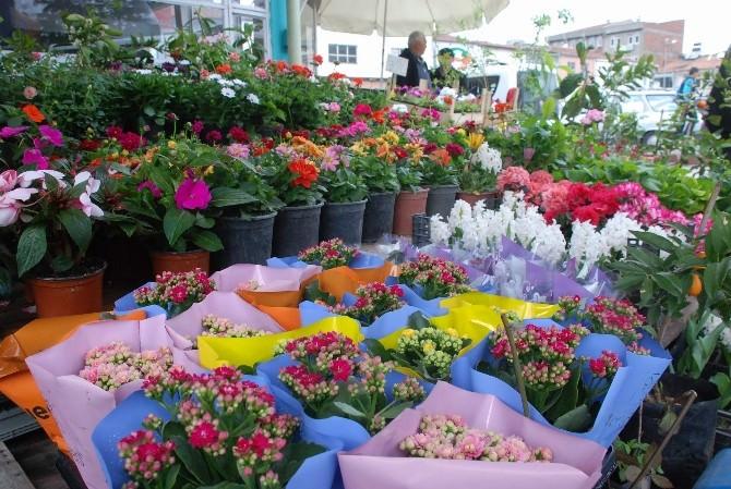 İlkbaharla Birlikte Çiçekler Görücüye Çıktı
