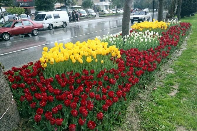 Aydın Baharı Laleler İle Karşılıyor
