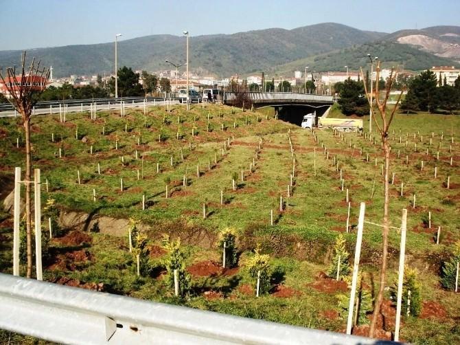Kocaeli'de 6 Milyon 650 Bin Ağaç Toprakla Buluştu