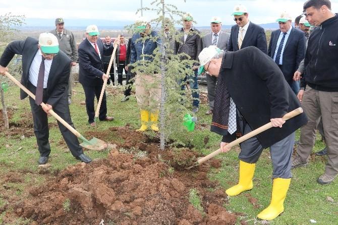 Erdoğan Adına Hatıra Ormanı Oluşturuldu