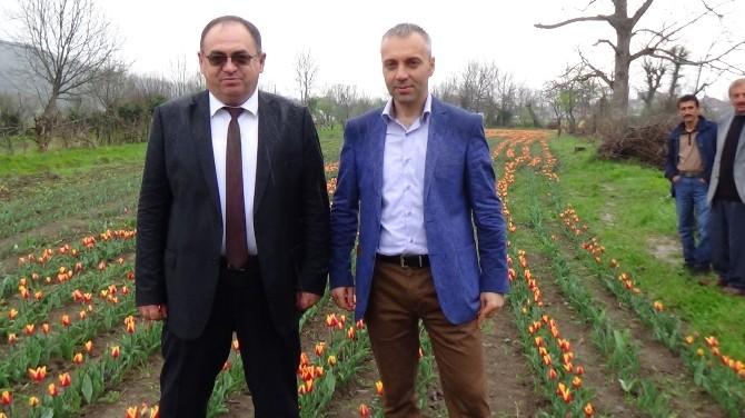 Zonguldak'a İlk Kez Lale Bahçeleri Kuruldu