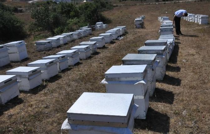 Arıcılara 'Bahar' Uyarısı