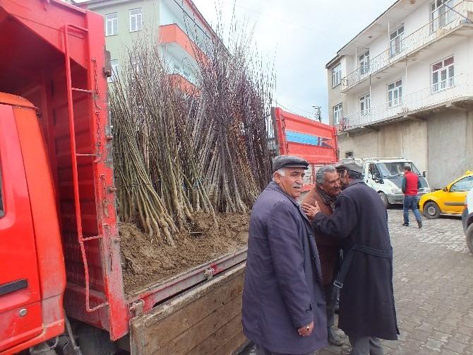 Malazgirt'te Fidan Satışları Başladı