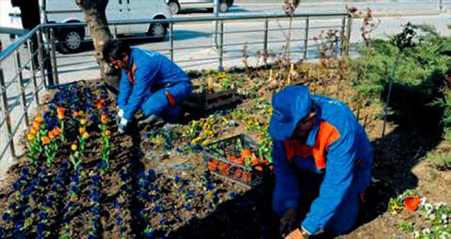 Mamak parklarına 200 bin çiçek