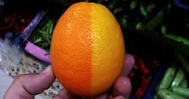 Bu meyve görenleri hayrete düşürüyor