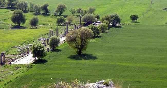 Antik kenti buğday tarlası yaptılar