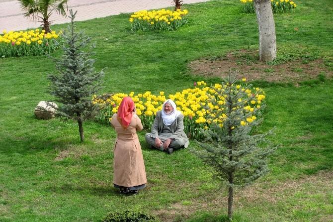 Arabanlılar Hafta Sonunu Belediye Parkında Geçirdi