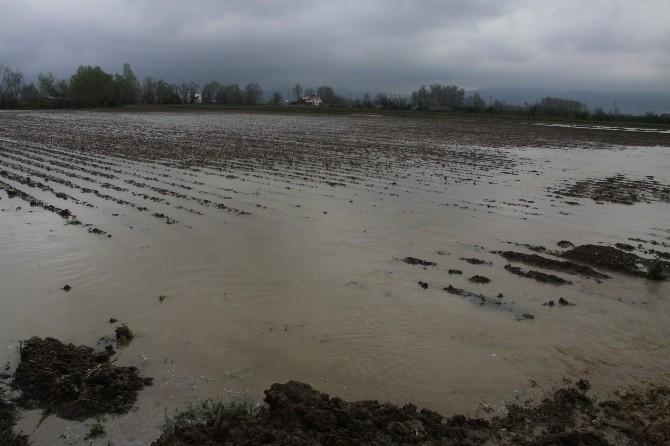 İnegöl'de Yağmur Ve Kar Sulara Patates Üretisini Vurdu, Tarlalar Göle Döndü