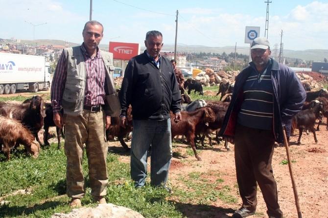 Hataylı Çobanlar Sınırdaki Meranın Açılmasını İstiyor